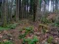 trail-800