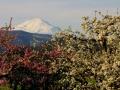 Mt-Adams5