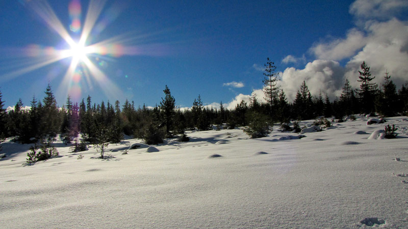 field-of-snow