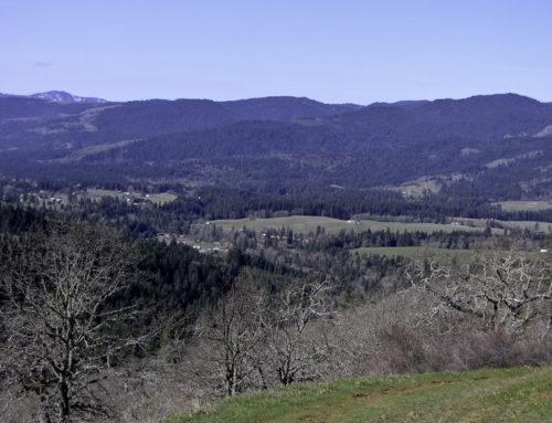 Weldon Wagon Trail