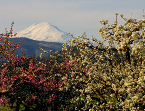 Hood River Fruit Trees