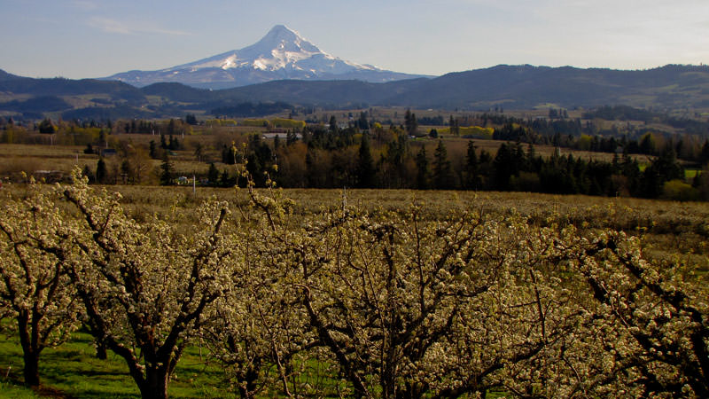 Hood River Fruit Trees - Adventures with Dotty